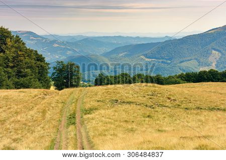Country Road Through Grassy Meadow In Mountains. Nature Scenery With Beech Trees In The Distance. Su