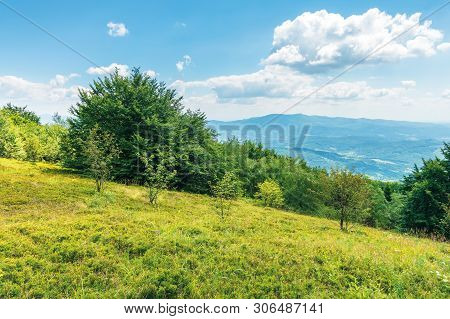 Trees On The Grassy Slope. Mountain Ridge In The Distance. Beautiful Summer Landscape. Sunny Weather