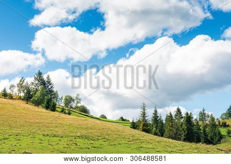 Countryside Landscape With Forest On Rolling Hills.  Beautiful Scenery Of In Early Autumn. Bright We
