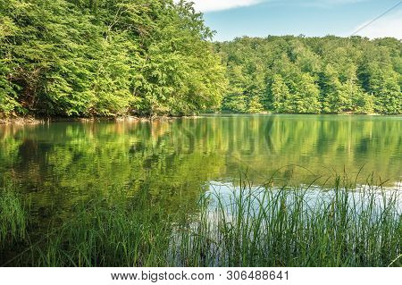 Beech Forest Reflection In The Lake. Calm Nature Scenery On A Sunny Day. Great Summr Vacation. Prote