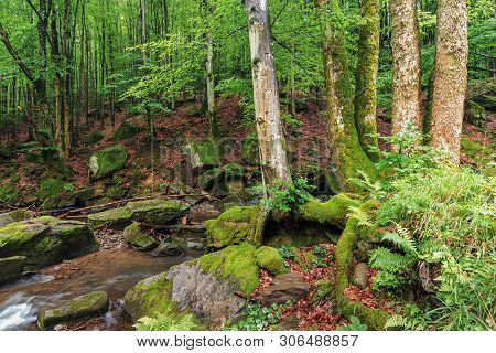 Brook Among Rocks And Trees. Beautiful Nature Scenery In The Beech Forest. Wet Mossy Boulders. Lush