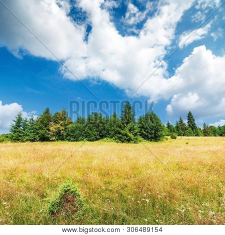 Grassy Meadow On The Edge Of The Forest. Lovely Summer Scenery On A Bright Sunny Day.  Beautiful Clo