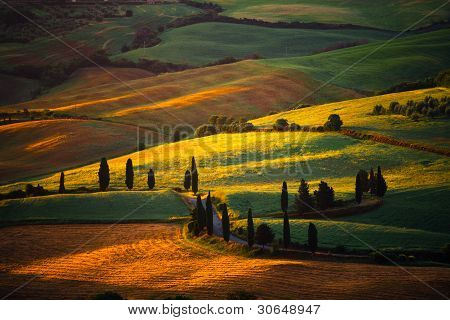 Tuscany's countryside