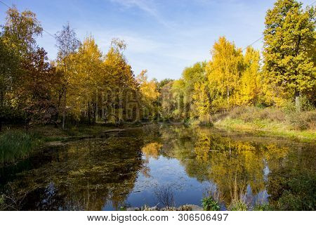 Autumn Park, Trees Reflected In The Pond,  Withered Leaves