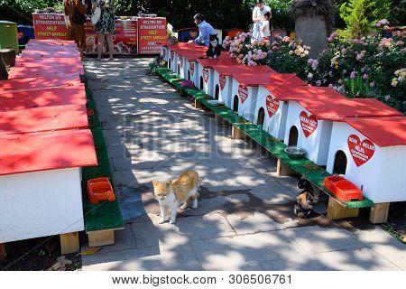 Antalya, Turkey - May 19, 2019: Cat Street, Cat Houses And Feeding Stray Cats On The Street