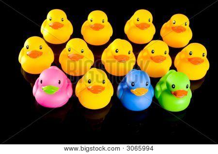 Colorful Ducks On Black