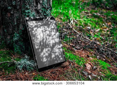 Digital Tablet Computer With Blank Screen In A Forest Background, Mossy Pine Tree And Soil. Mobile D