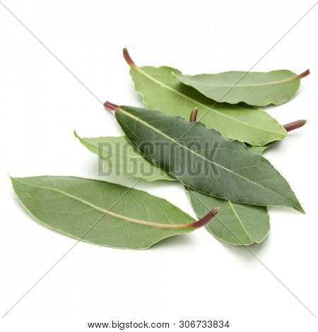 Aromatic bay leaves isolated on white background cutout