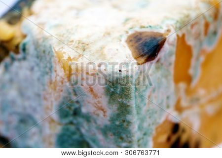 Moldy Cheese. Backgrounds and Wallpapers.  Decomposing cheddar cheese with Mold. Extreme close up.