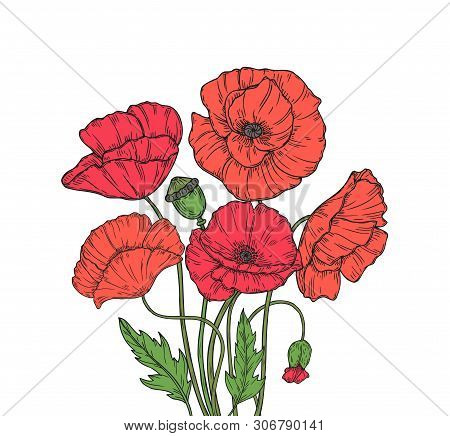 Poppy Bouquet. Red Poppies Flower Meadow Garden Flowers Decorative Plant Poppy Bud Planting Floral A
