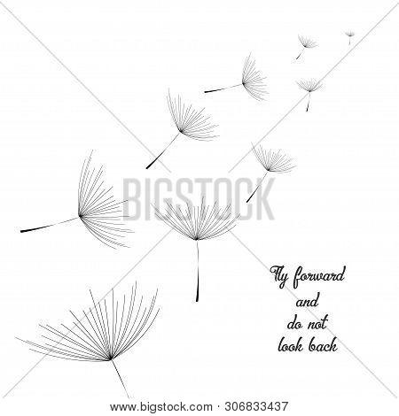 Dandelion. Flying Dandelion Black. Abstract Dandelion Background