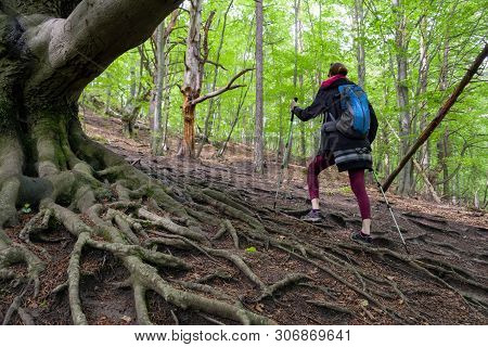 Woman Hiking With Blue Backpack In Forest At Sulov Rocks, Slovakia