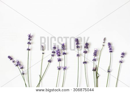 Blooming Purple Lavender Flowers Isolated On White Table Background. Decorative Floral Frame, Web Ba
