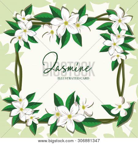 Vector Jasmine Flowers Horizontal Banner. Design For Tea, Natural Cosmetics, Beauty Store, Health Ca