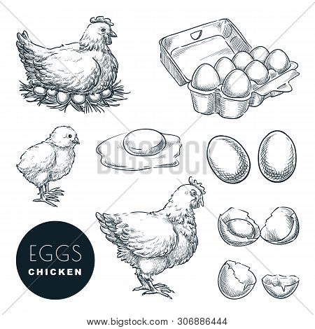 Chicken Farm Fresh Eggs. Vector Set Of Sketch Design Elements. Hand Drawn Hen, Poultry And Little Ch