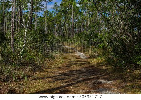Long Pine Key Trail In Everglades National Park In Florida, United States