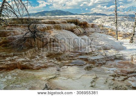 Canary Spring In Yellowstone National Park In Wyoming, United States