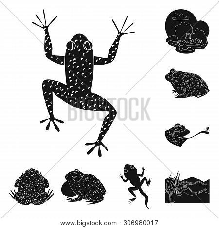Vector design of fauna and reptile icon. Set of fauna and anuran stock vector illustration. poster