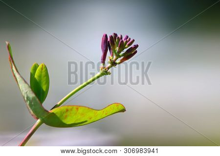 Close up shot of blue bell flower buds