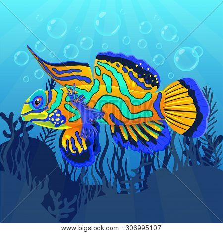 Mandarin Fish At The Bottom Of Sea With Algae, Flat Realistic Drawing. Cute Painted Colorful Multi-c