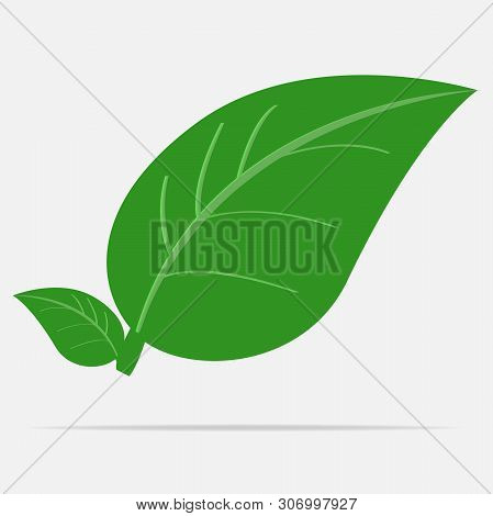 Vector Leaf Icon. Image Of A Spring Leaf On A Gray Background