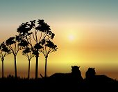 illustration of two tigers resting at sunrise poster