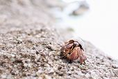Hermit Crab Walking Along The Beach poster