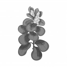 Isolated Object Of Leaves And Leaf Symbol. Set Of Leaves And Botanical Stock Symbol For Web.