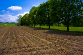 Farmland And Trees