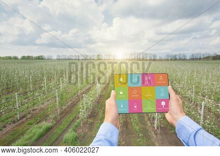 Smart Farming And Agritech Concept. Collage With Farmer Using Tablet Computer App For Agriculture Ma