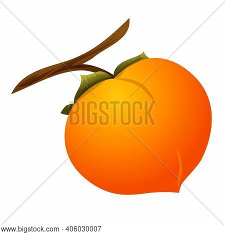 Persimmon Tree Branch Icon. Cartoon Of Persimmon Tree Branch Vector Icon For Web Design Isolated On