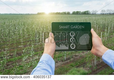 Digital Agriculture, Smart Gardening Concept. Farmer Using Tablet App To Grow Eco Products, Performi
