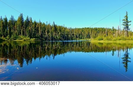 Forest Reflections - A View Looking Across Island Lake Near Santiam Pass - Cascade Range - Or