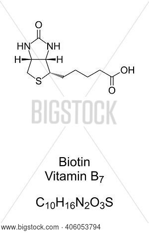 Biotin, Vitamin B7, Chemical Formula And Skeletal Structure. Involved In Many Metabolic Processes, P
