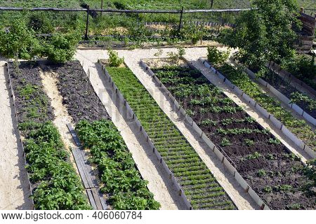 Beds With Vegetables In The Garden. Long, Even Ridges Are Parallel To Each Other. The Location Of Th