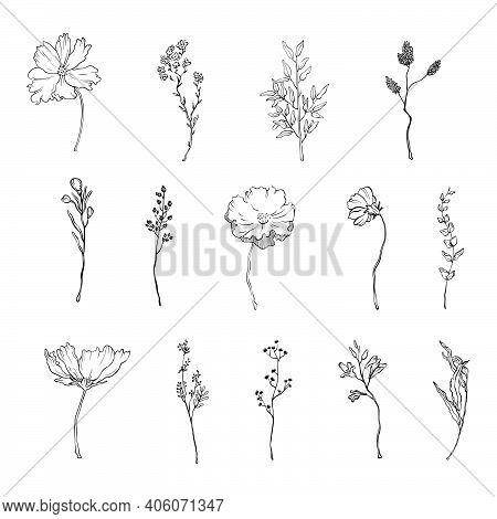 Vector Floral Black Branches And Flowers. Floral Leaves Branches And Flowers In Doodle Style For Min