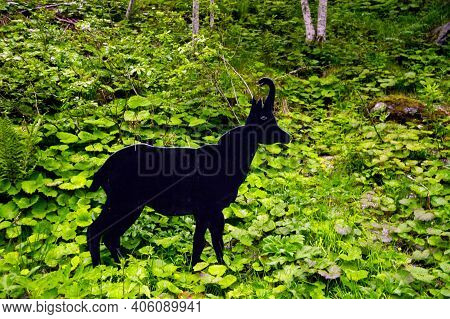 A Mountain Chamois Statue Standing In A Forest, Animals And Nature
