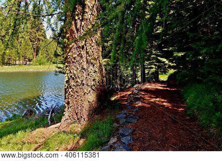 Lakeside Walkway - A Hiking Trail Along The Shore Of Walton Lake - Ochoco Mountains - Northeast Of P