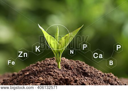 Mineral Fertilizer. Young Seedling Growing In Soil, Closeup