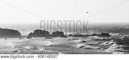 Panoramic view of rough sea in black and white, one seagull flying in the sky. Coastal landscape with rocks and ocean.