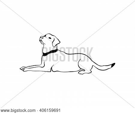 Labrador Laying Dog In Doodle Style. Vector Line Drawn Stock Illustration Of Labrador