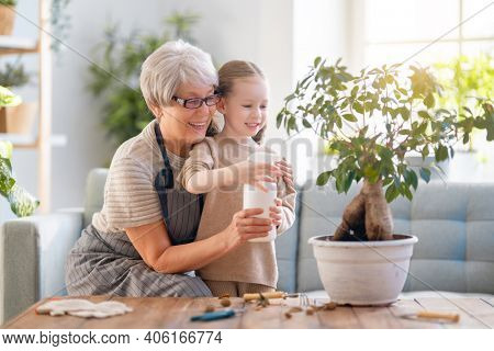 Cute child girl helping her grandmother to care for plants. Granny and her granddaughter engaging in gardening at home. Happy family in spring day.