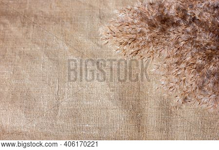 Dried Reed Grass On Canvas Background, Monochrome Background, Copy Space Fir Text