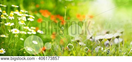 Sunny Spring Meadow With Daisies And Poppies. Horizontal Natur Background With Short Deep Of Focus A