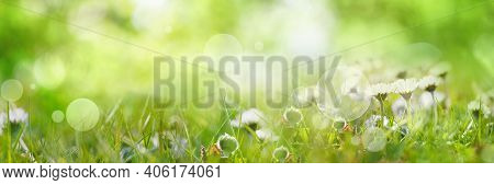 Sunny Spring Meadow With Daisies. Horizontal Natur Background With Short Deep Of Focus And Bright Bo