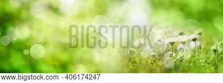 Abstract Sunny Spring Background. Green Meadow With Wildflowers And Bright Bokeh. Concept For Ecolog