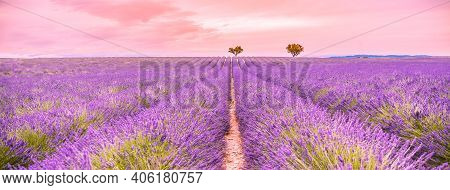 Relaxing View Of French Lavender Field At Sunset. Sunset Over A Violet Lavender Field In Provence, F