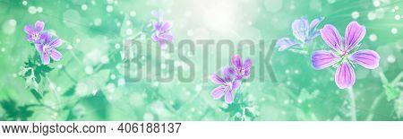 Spring-summer Background - Blooming Woodland Geranium (geranium Sylvaticum), Frame In The Rays Of Su