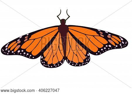 Orange Butterfly Close Up. Vector Monarch Butterfly Isolated Insect Object.