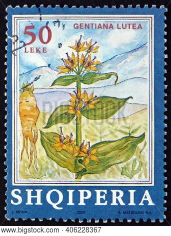 Albania - Circa 2000: A Stamp Printed In Albania Shows Great Yellow Gentian, Gentiana Lutea, Is An H